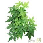 ReptiZOO Террариумное растение Абутилон 30см