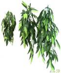 ReptiZOO Террариумное растение Рускус 40см