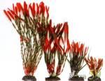 Искусственное растение Валлиснерия спиральная красно-зеленая 20см