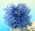 Силиконовый Коралл синий 14x14x13см